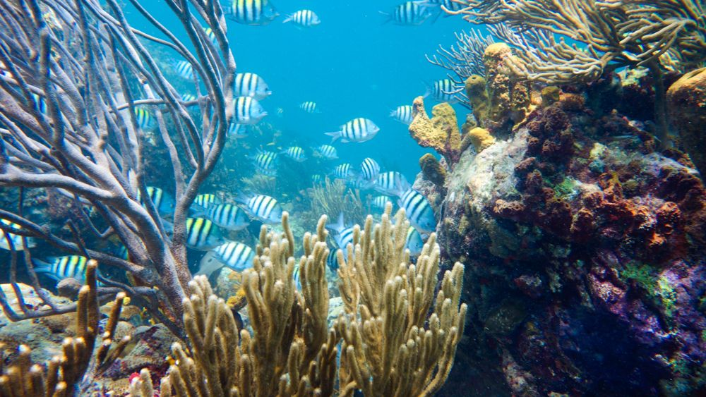 Carriacou Scuba Diving Grenada Guided Dives
